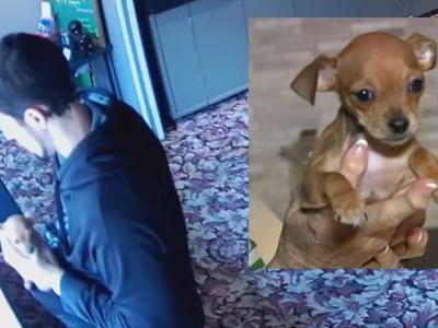 Pet store surveillance video shows man stuffing puppy in pocket, walking out of store