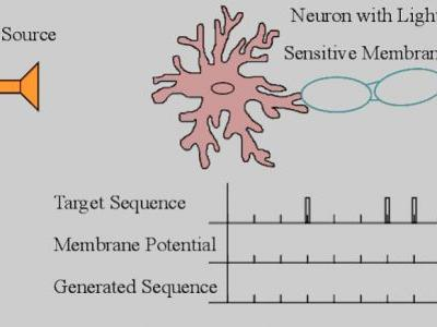 Distortion Distribution of Neural Spike Train Sequence Matching with Optogenetics
