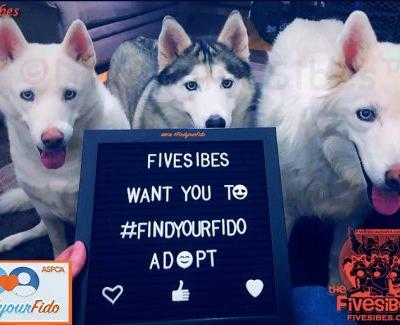 FindYourFido With FiveSibes and the ASPCA! Plus A Gift Pack Giveaway!