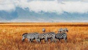 Africa boosts sustainable tourism to lure tourists