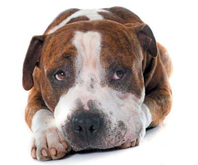 Colitis in Dogs - Know the Causes, Symptoms and Treatments