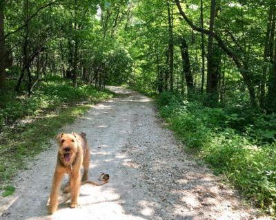 Dog-Friendly Hiking Near Chicago