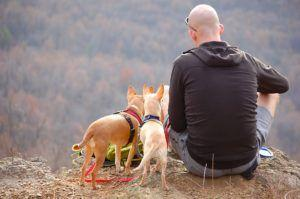 10 Tips For Camping With Your Pup