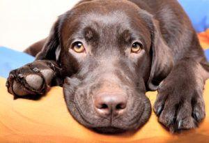 Probiotics For Dogs - What Every Owner Needs To Know