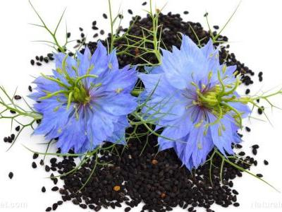 The therapeutic heart benefits of long-term administration of Nigella sativa