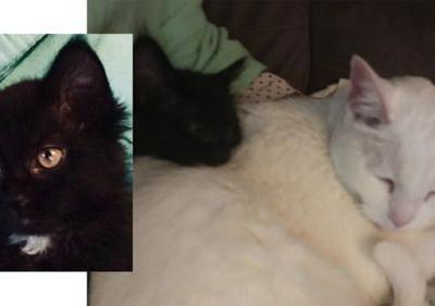 We hadtwo wonderful adult cats from AHS. We sadly lost our