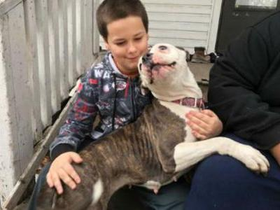 Pit bull protects 9-year-old boy during break-in