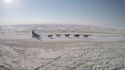 """Sled Dogs"" Reveals the Cold Truth"