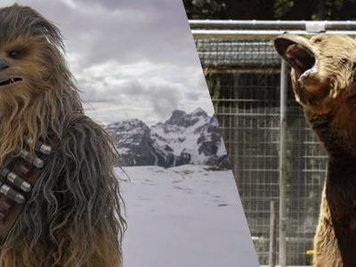 Video: Watch How Skywalker Sound Used A Bear For Chewbacca's Voice in 'Solo: A Star Wars Story'