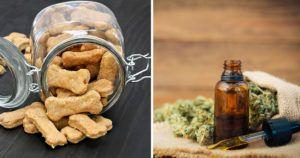 CBD Oil Tinctures vs. CBD Treats for Dogs: Which Is Better?