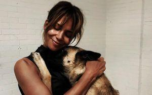 Halle Berry Had A Hand In Training Her Canine Co-Stars For John Wick: Chapter 3 - Parabellum