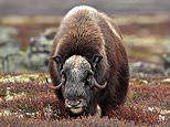 Have a rare old time. Top places to see ten endangered animals