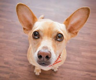 How Do You Know if You Give Your Dog Enough Attention?