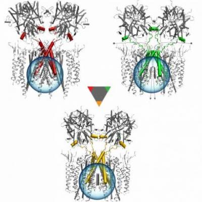 Signal Transmission in Neuronal Cells