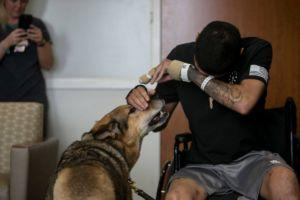 Wounded Soldier And Military Dog Reunite After Receiving Purple Hearts