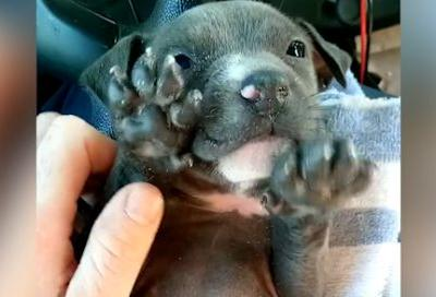 Daytona Beach officers give freezing puppy second chance at life