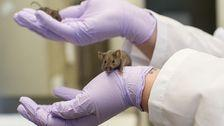 A Harvard Geneticist Wants To Sell A Magical Molecule To Reverse Aging. It Works. In Mice