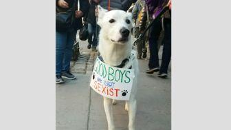 Some Very Good Dogs Are Out Supporting The Women's March