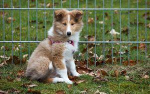 The 6 Best Toys For Puppies