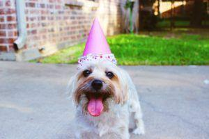 5 Epic Ideas to Throw The Perfect Birthday Party For Your Pup