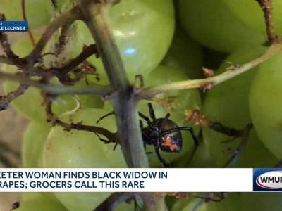 Woman finds poisonous spider in organic grapes