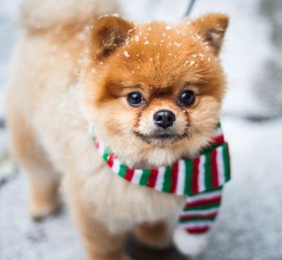 The Christmas food you can and can't share with your pets
