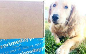 New In-Home Amazon Delivery Option Poses Problems For Dog Owners