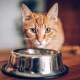 You Can, In Fact, Feed Your Cat Shrimp - But Only in Moderation, According to Vets