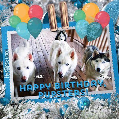 FiveSibes Pupsters Celebrate 11th Birthay!