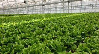 Safety aspects of indoor farming signal a change in agriculture
