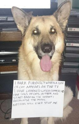 Predictive Text? Try Predictive Bark