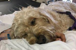 Teenager Wakes From Coma After Visit From A Therapy Dog