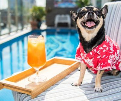 Here's How To Apply To Hotels's Canine Critic Job For A Pup-Friendly Getaway