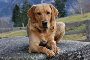 5 Amazing Things Dogs Can Sense About Humans