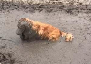 Dog Takes His Love For Playing In Mud To A Whole New Level