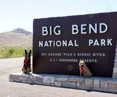 Exploring Big Bend With Dogs