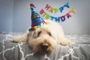 "Are ""Dog Years"" Real? Here's How To REALLY Calculate Your Pet's Age"