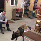 This K9 Unit Pup Tried On His Winter Booties For the First Time, and Nope, Doesn't Like That!
