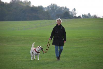 5 Ways to Show Your Dog Training Clients Some Love This February