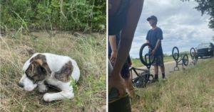 Teens Find Injured Dog Near Busy Road And Save His Life