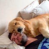 This Man's Morning Alarm Is a Golden Retreiver Spooning His Face - BRB, Checking to See If My iPhone Has That Function