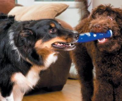 4 Tips for Finding a Good Playmate for Your Dog