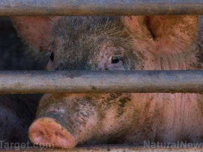 Factory farming is out of control in Iowa, devastating resources: Over 50 groups are demanding limits