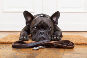5 Things You Should Know Before Buying A Dog Door