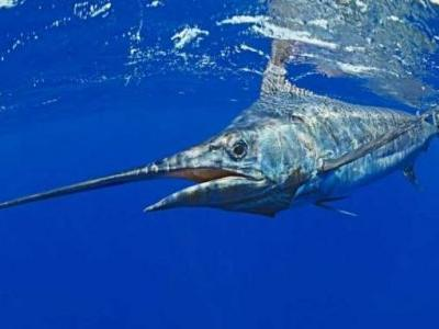 Marine life and fisheries are threatened as the oceans lose oxygen