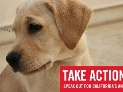 Support the Animal Welfare and Violence Intervention Act of 2018