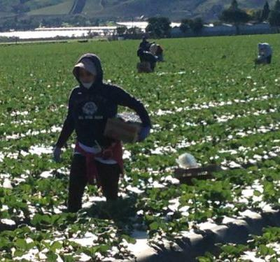 Op-ed: Migrant Farmworkers, Native Ranchers in Border States Hit Hardest by COVID-19