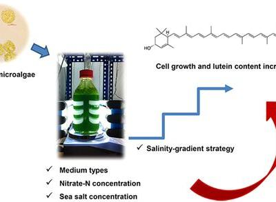 Manipulating Nutritional Conditions and Salinity‐Gradient Stress for Enhanced Lutein Production in Marine Microalga Chlamydomonas sp