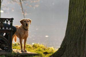 Here's How To Socialize Your Adult Rescue Dog