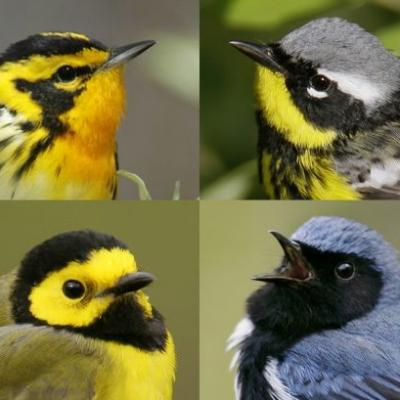 The American Birding week is expected to attract huge tourism dollars